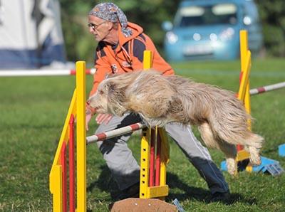 Dog Show Honiton