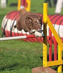 Honiton Canine Agility 2010