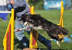 Dog agility Photography Dorset