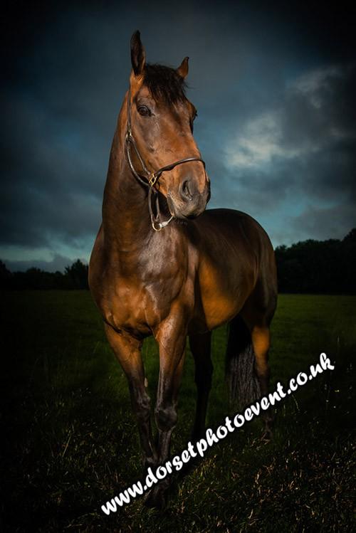 Fine Art Equestrian Portraits Dorset