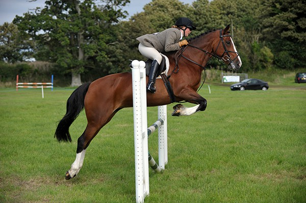 South Dorset Hunt Showjumping