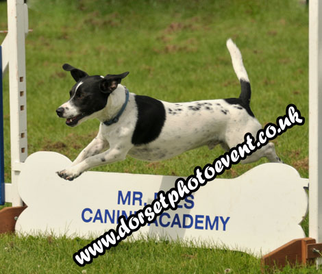 Dog Agility Photographer Dorset