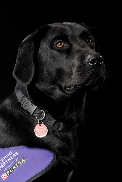 Professional Dog Portrait by Dorset Photo Event