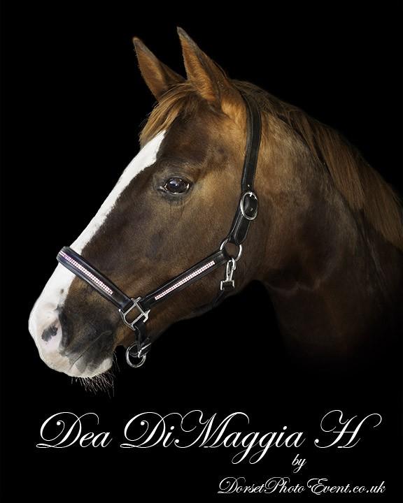 Fine Art Equestrian Portrait