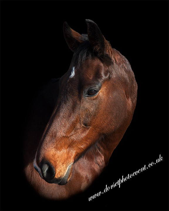 DorsetPhotoEvent Horse Photographer UK