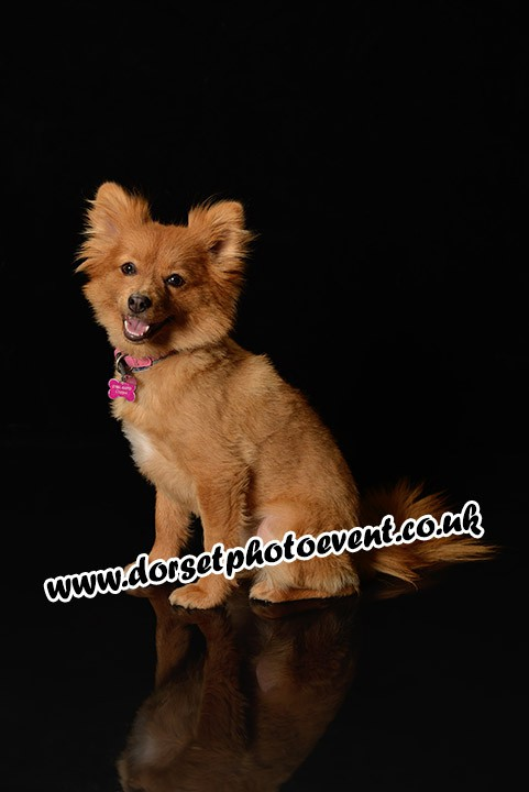 Dorset Dog Portrait Photography