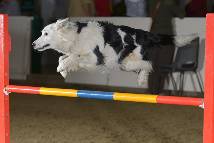 iLux Summit Dog Agility