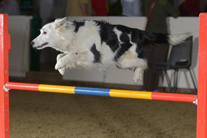 iLux Summit Dog Agility