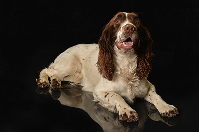Dog Agility Photography Dorset