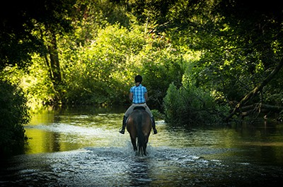 Fine Art Equestrian Photography & Stable Visits