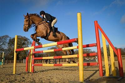 Equestrian Photography Dorset - Horse Photographer UK