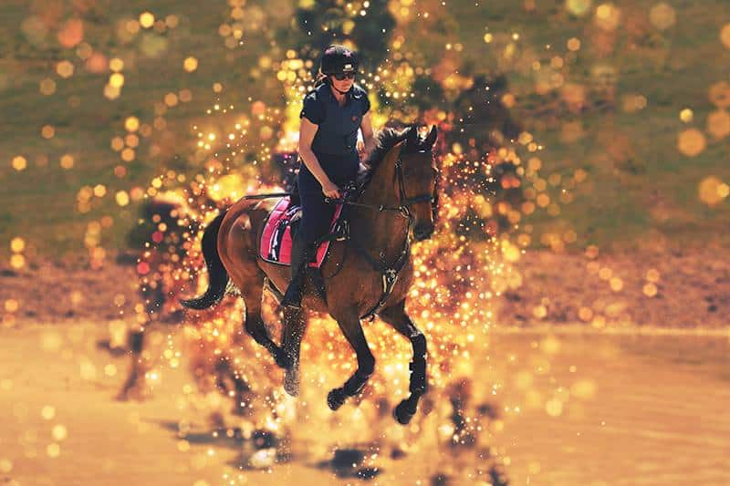 Equine Photographer Customer Edit